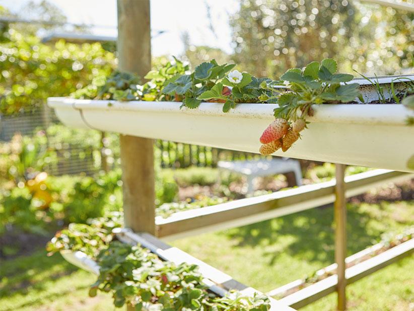 Top Erdbeeren pflanzen: Anleitung, Tipps und Ideen - Lidl.de &UT_23