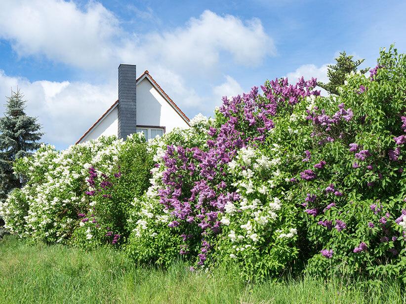 Pflanzen Online Kaufen Gunstige Preise Lidl De