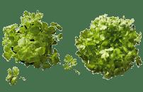 Bioland Kräuter