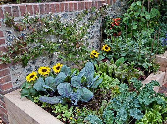 Hochbeet Richtig Befüllen Und Bepflanzen Lidlde